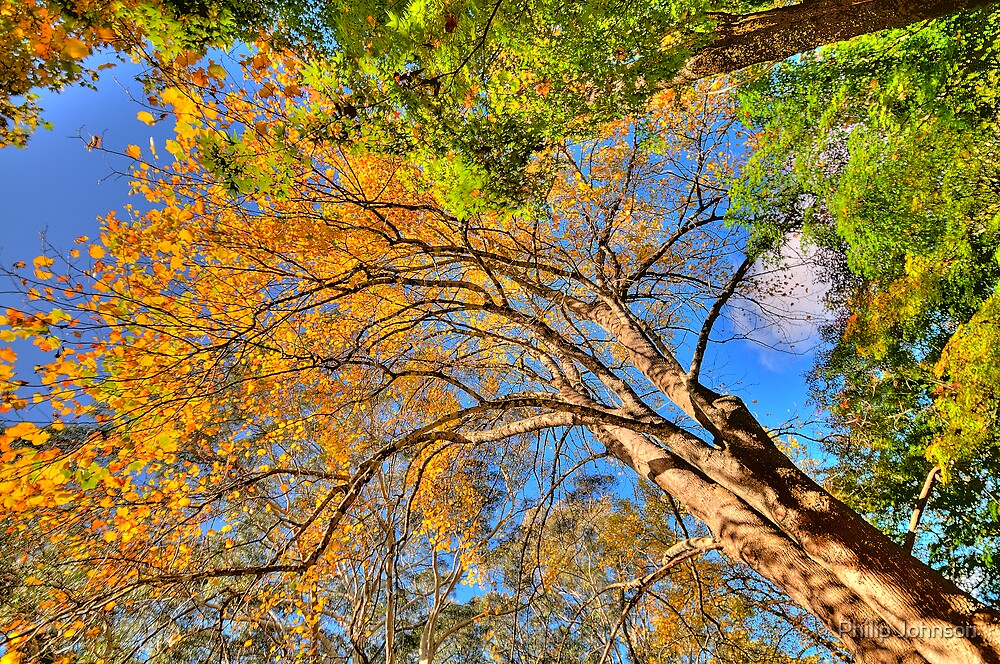 Reach For The Sky - Mount Wilson - The HDR Experience by Philip Johnson