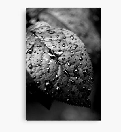 Water Drop Detail Canvas Print