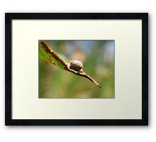 Pussycat Leafhopper Framed Print