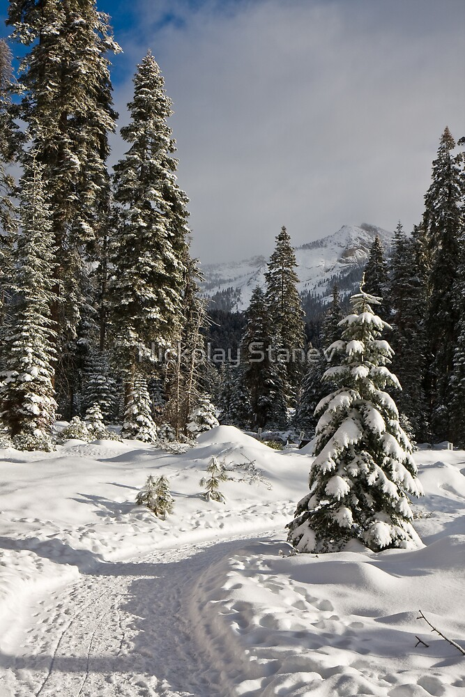 Winter Path by Nickolay Stanev