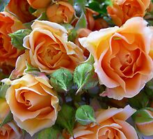 Just Flowers >> by JuliaWright