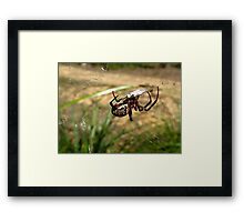 Wrapping Lunch Framed Print