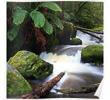 rainforest freshness Poster