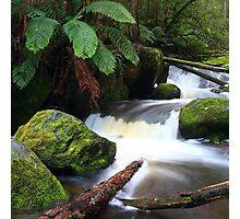 rainforest freshness Photographic Print