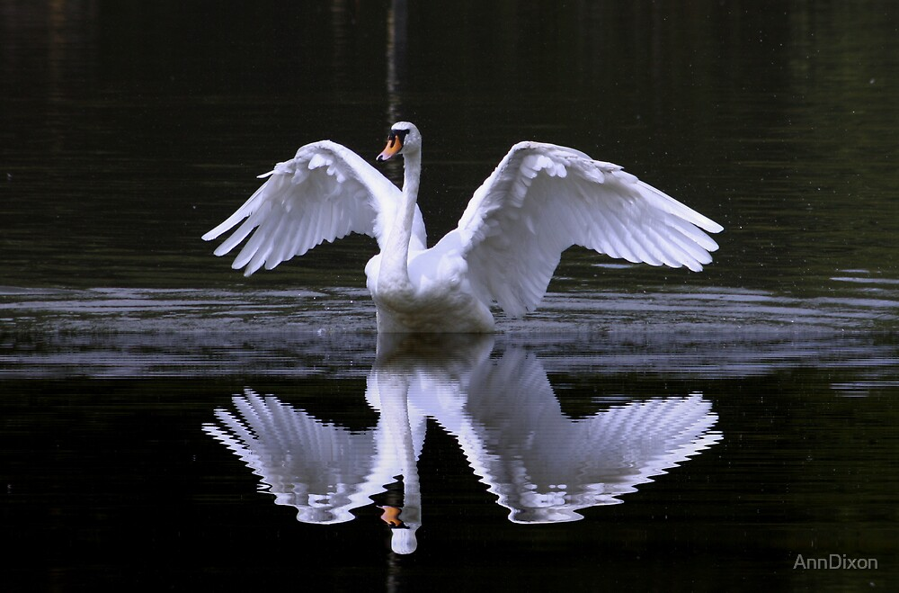 Swan and Reflection by AnnDixon