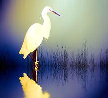Egret in Amethyst by shalisa