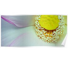 Anthers and petals of Lotus Poster