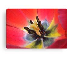 macro of red tulip interior Canvas Print