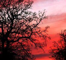 epsom oak by Kent Tisher