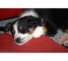 Lovely When Sleeping................. Photographic Print