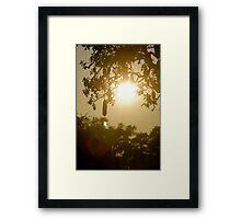 sausage tree Framed Print