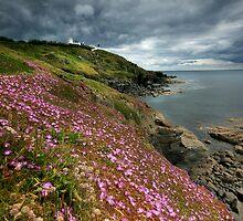 Cornwall : Flowering Lizard 2 by Celtic Mystery