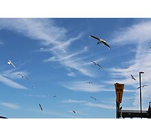 Seagulls at Wells Photographic Print