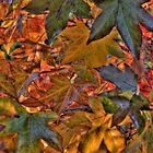 Liquidambar Leaves by Elaine Teague