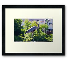 I am a snow bird! Framed Print