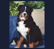 Pretty Bernese Mountain Dog
