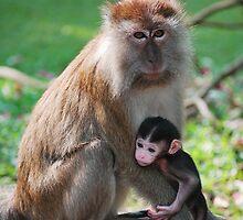 Monkey Mum by Erin-Louise Hickson