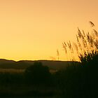 Sunset in the Cane by Caroline Angell
