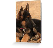 Black German Shepherd Greeting Card