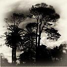 twilight silhouette by dennis william gaylor