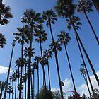 Palm trees by rasim1