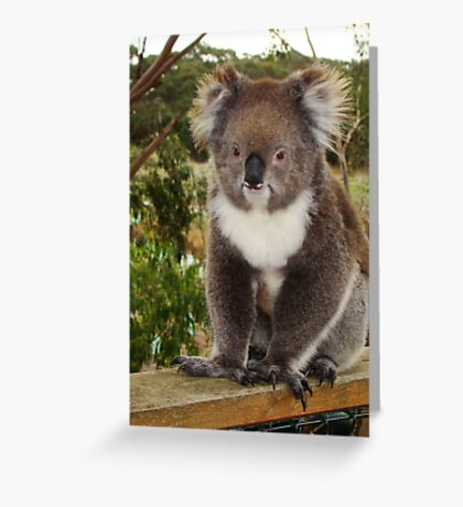 Young bloke Greeting Card