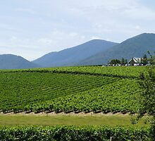 Yarra Valley Vineyard ~ Coldstream by lols