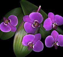 Deep Purple by scankunst