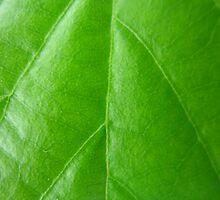 Rich shiny leaf by seablue5