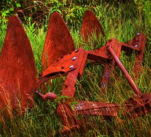 Old Plow, Engulfed by Delany Dean