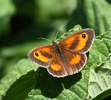 GateKeeper by Neil Ludford