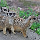 Three Cuties by Robert Abraham