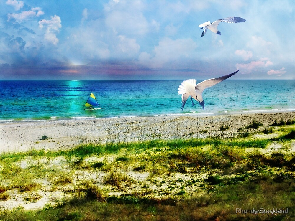 On Canvas Wings I Fly by Rhonda Strickland