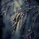 Inverno II by Joanne Ho
