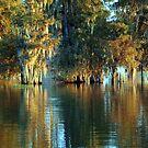 Cypress Bayou by AcadianaGal