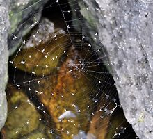 Watery Web by distinctmoments