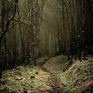 Misty by Joanne Ho