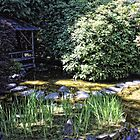 A pond in the buchart Gardens by NoahC