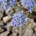 Wildflowers #2 by Adrienne Evans