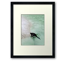 penguin diving Framed Print