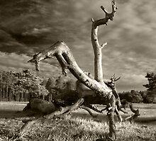 Acrobatics natural by zumi