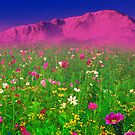 Springtime in the Rockies by Beverly Lussier