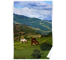 Oregon Countryside Poster