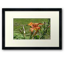 lily 4 Framed Print