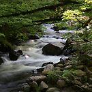 Smoky Mountain Stream by Sherri Hamilton
