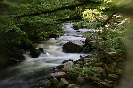 Smoky Mountain Stream by Sherri Hamilton