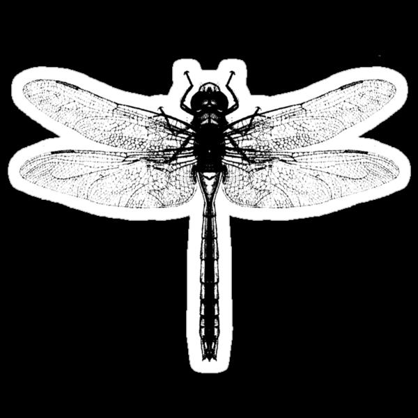Black Dragonfly by Zehda