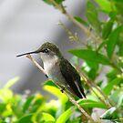 Hummingbird 2 by Brad Sumner