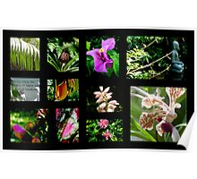 A~natural Botanics Collage  Poster