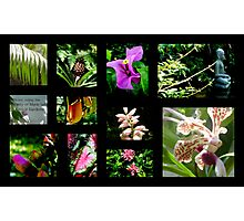 A~natural Botanics Collage  Photographic Print